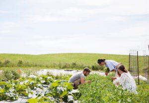 Økologisk grøntsagsmark Herthamarken