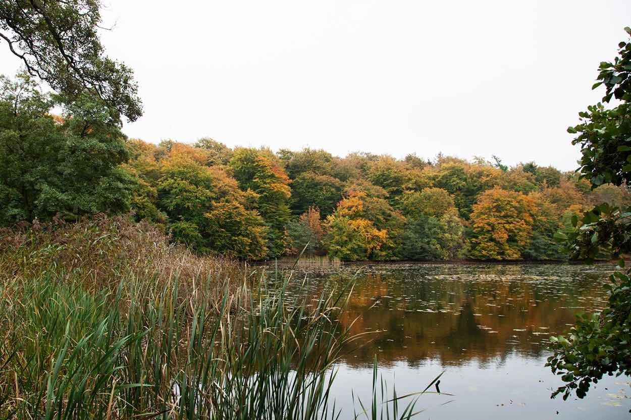 Efterår i skoven Roskilde
